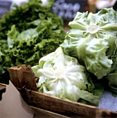 Lettuce and endive at the market