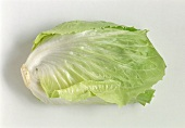 Sugar loaf lettuce