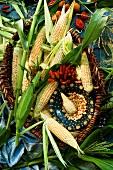 Sweet corn cobs in a basket