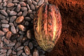 Cocoa fruit, cocoa beans and cocoa powder (close-up)