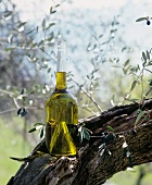 Bottle of Olive Oil on an Olive Tree