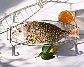 A seasoned sea bream on grill rack