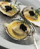 Three Oysters in Cream Sauce with Caviar and Dill