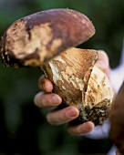 Hand holding a yellow boletus