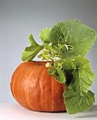 An Orange Pumpkin with Vine Attached