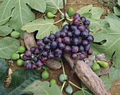 Red Grapes on Fig Leaves with Figs