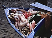 Freshly Caught Fish in a Boat