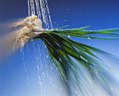 Water Spraying Green Onions