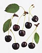 A few black cherries