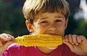 Small boy eating a corn cob