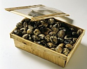 Clams in a wooden box