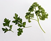Flat-leaf and curly parsley