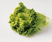 Lollo biondo lettuce