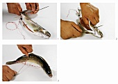 Tying trout with kitchen string