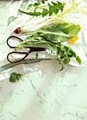 Dandelion, sorrel, rocket and watercress (wild herbs)
