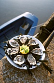 Oysters on a plate with lemon and seaweed