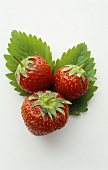 Three strawberries on strawberry leaves