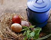 Coloured eggs in straw nest; blue milk can