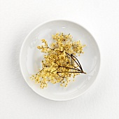 Dried elderflowers (for elderflower tea) on plate
