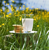 Glass of milk and biscuits in summer meadow