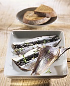 Sardine carpaccio with honey and thyme