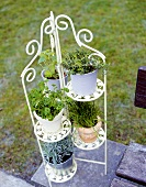 Tiered stand with various herbs in open air