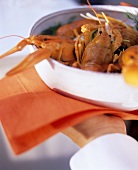 Freshwater crayfish in root vegetable stock