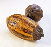Two cacao fruits on white background