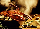 Cooked lobster, mussels and seaweed in pan