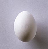White hen's egg