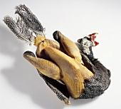 Afrikanisches Huhn (Guinea-Huhn), teilweise gerupft