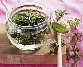 Making herb liqueur (infusing herbs in schnapps jar)