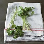 Coriander leaves on tea towel
