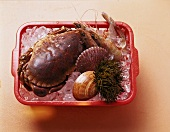Crustaceans, shellfish & sea urchin in plastic basket with ice