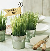 Invitation to barbecue (pots of chives with flags)