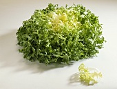 Friseesalat (Cichorium endivia var. crispum)