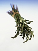 Wild asparagus (Asparagus officinalis) from Italy