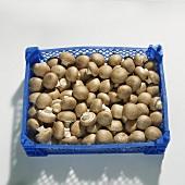 Chestnut mushrooms (Agaricus bisporus) in crate