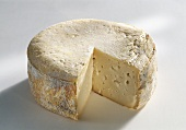 Queso de la Serena, sheep's cheese from Spain