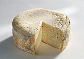 Queso de la Serena, sheep's cheese from Spain