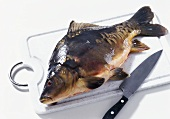 Mirror carp (Cyprinus carpio) on chopping board