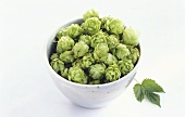 A bowl of hops on a light background
