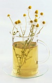 A glass of chamomile tea with sprigs of chamomile