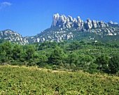 Vineyard near El Bruch with Montserrat mountains, Spain