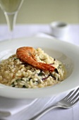 Risotto with king prawn
