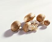 Several brown mushrooms