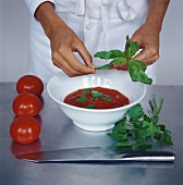 Making tomato sauce with basil