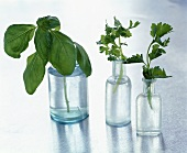 An assortment of herbs in bottles of water