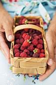 Hands holding woodchip basket of fresh raspberries