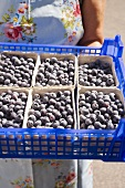 Woman holding crate of blueberries in cardboard punnets